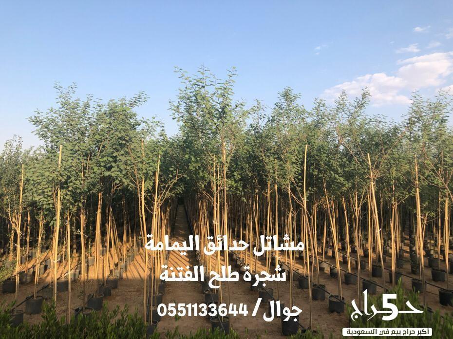 أشجار احجام كبيره - شتلات زهور