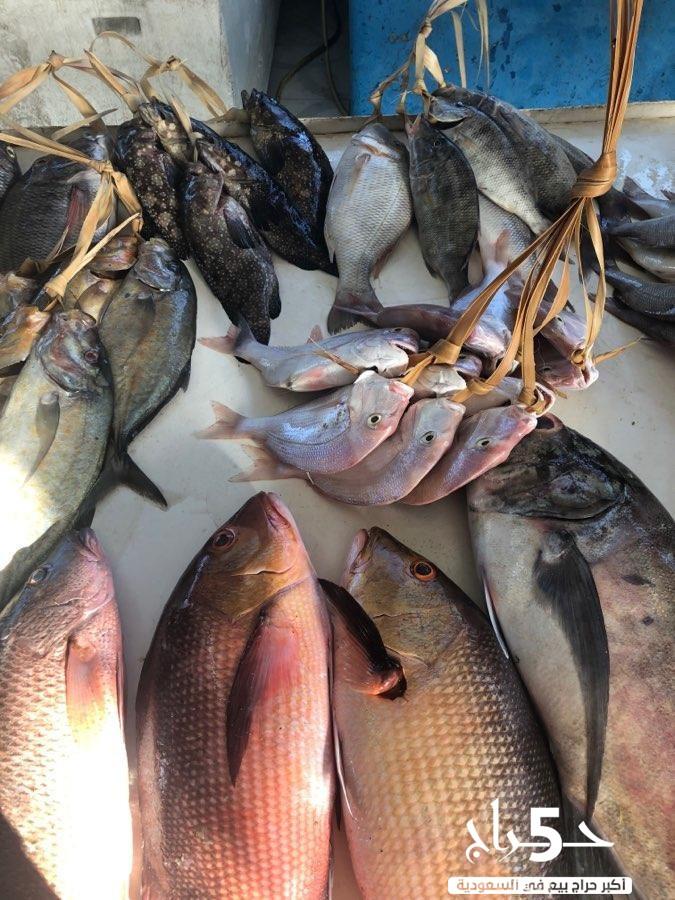 أسماك أملج طازجة يوميا .