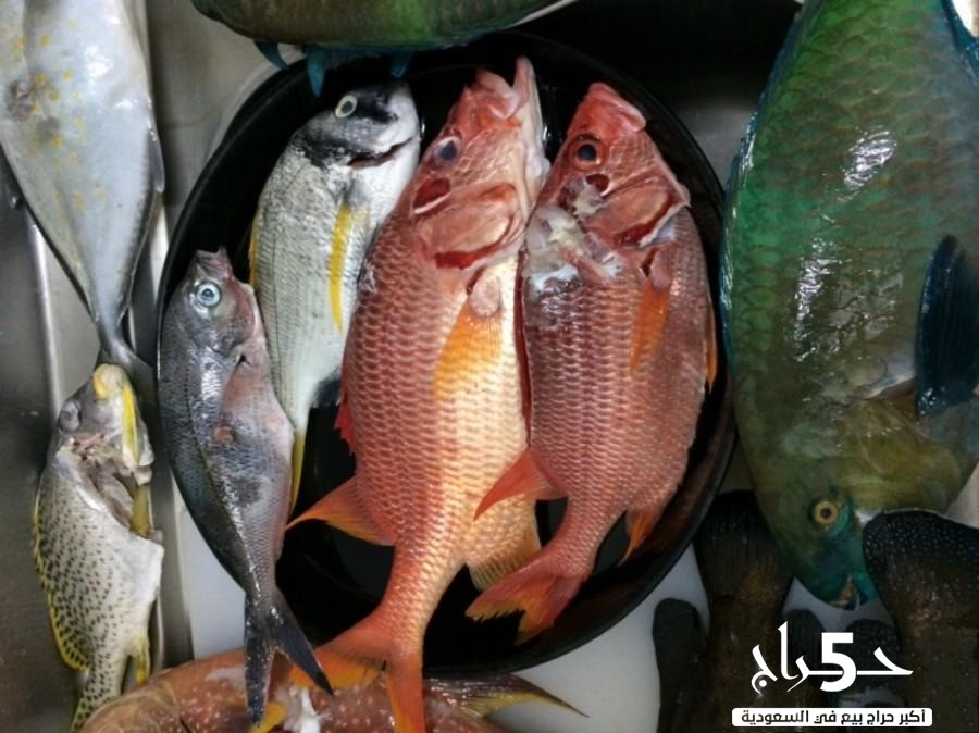 سمك صيد كل جمعة مع خدمه التوصيل و التنظيف