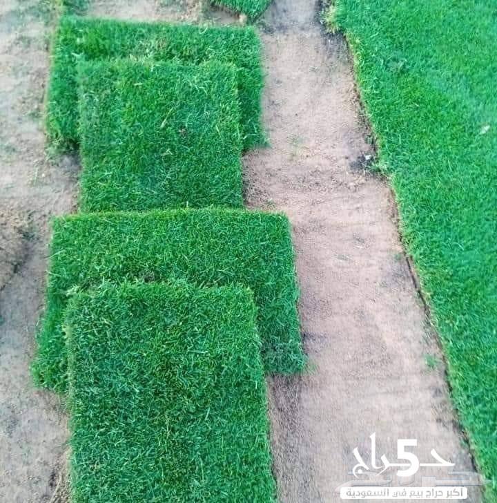 مسطحات خضراء